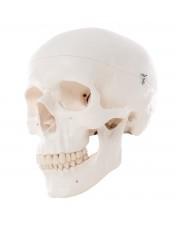3B Classic Skull