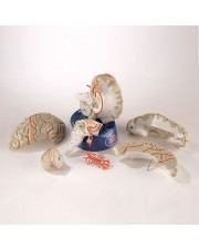 Denoyer Deluxe 8-Part Life-Size Brain with Arteries