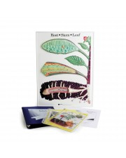 Root-Stem-Leaf Model Activity Set