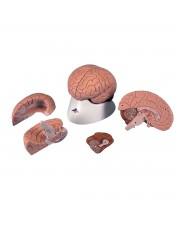 3B Brain - 4 Parts