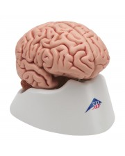 3B Classic Brain - 5 Parts
