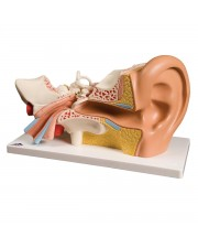 3B Classic Giant Ear - 4 Parts