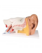 3B Classic Giant Ear - 6 Parts