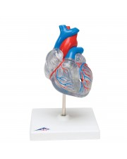 3B Classic Heart w/Conducting System