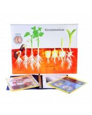 Germination Model Activity Set