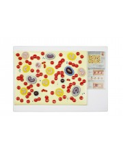 Walter Blood Cell Model