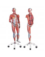 3B 3/4 Life-Size Dual-Sex Muscle Figure