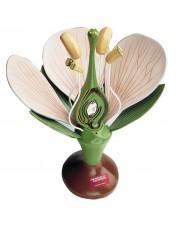Denoyer Giant Dicot Flower